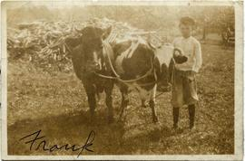 Frank Tapley with two cows
