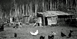 Chicken pen on the Neiland ranch