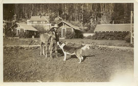 Boy with a foal and a dog
