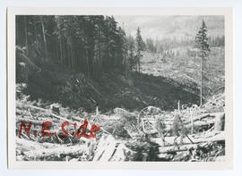 View of Logged Hillside from Proposed Roundhouse Site