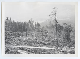 Clear Cutting for Run on Whistler Mountain