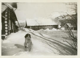 Dog outside Rainbow Lodge in the snow